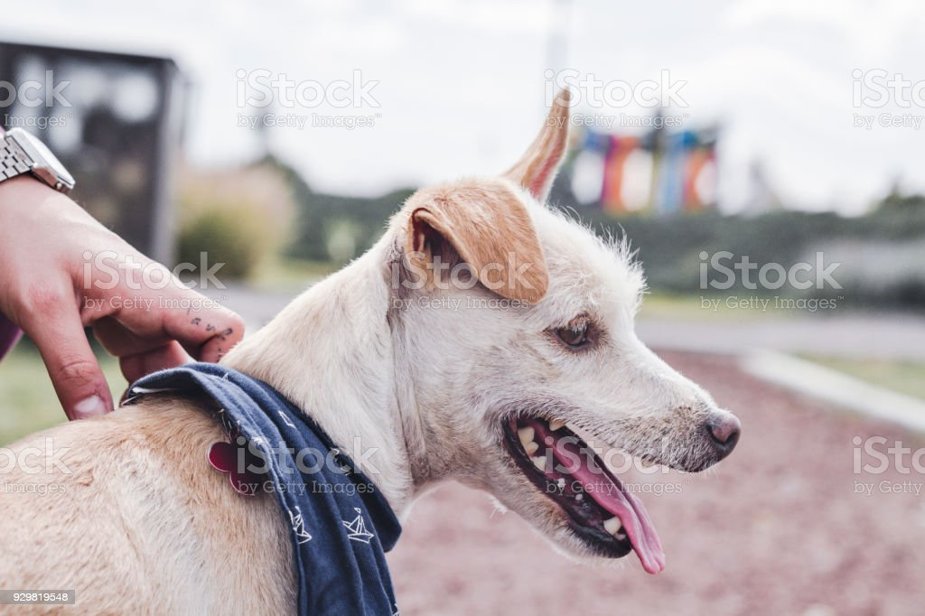 Dog with funny ears in the park stock photo