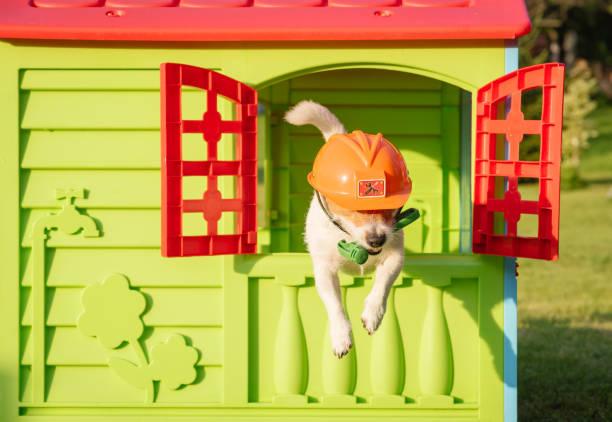 hund mit hammer und bauarbeiterhelm als lustige mechaniker in eile zu helfen - hundezubehör diy stock-fotos und bilder
