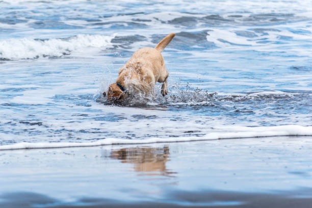 Dog with head in the sea