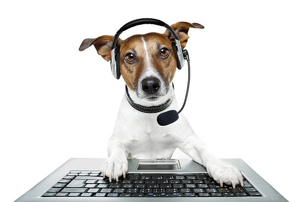 Hund mit headset und pc – Foto
