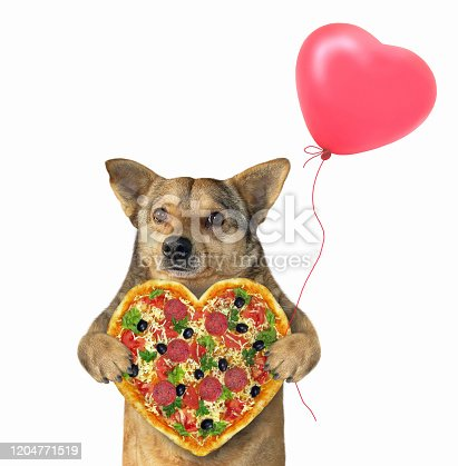 The beige dog is holding a heart shaped pizza and a red balloon. White background. Isolated.