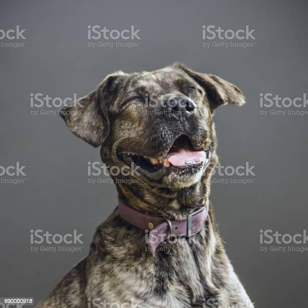 Dog with human expression picture id690000918?b=1&k=6&m=690000918&s=612x612&h=4jkl6chwj2vh0ili4x473ciyrx0jv9ad wdxjjdgynq=