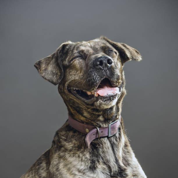 Dog with human expression picture id690000918?b=1&k=6&m=690000918&s=612x612&w=0&h= cf2voacdydj scmjloadi6ougg8bj8acnufgj3utpi=