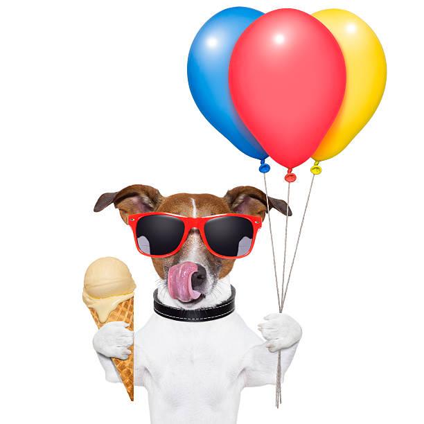 hund mit eis - eis ballons stock-fotos und bilder