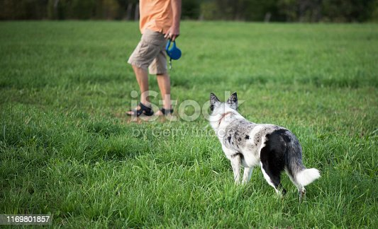 1053642922 istock photo Dog with its owner. In a position awaiting an order. 1169801857
