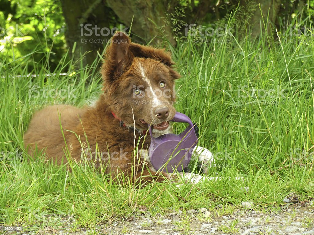 Dog With Lead royalty free stockfoto