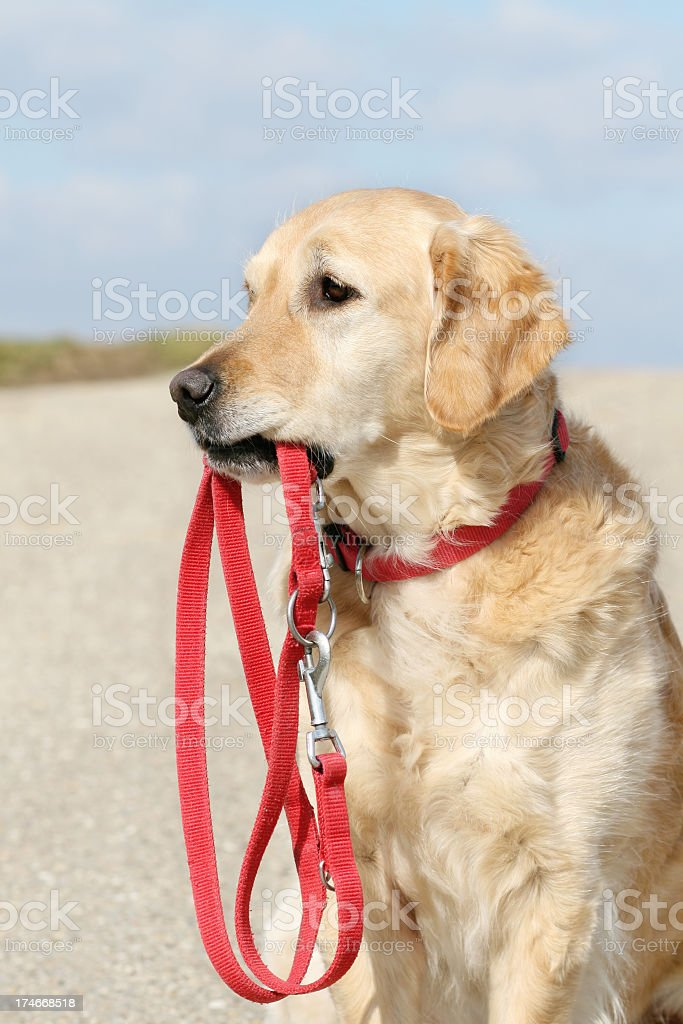 Dog with leash royalty-free stock photo