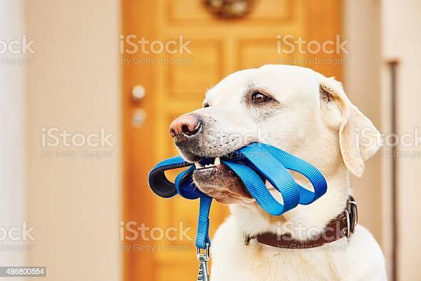 Dog with leash picture id495800554?b=1&k=6&m=495800554&s=612x612&h=sl3vwvrtppush3rqqldw4jnkateuiwm gok0i4t vgk=