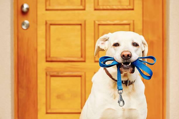 Dog with leash picture id495800846?b=1&k=6&m=495800846&s=612x612&w=0&h=8cpns6lg1isaib4mwig3cmbglq7jl9dhahrll3zbgno=