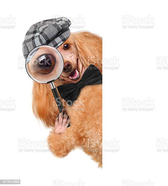 Dog with magnifying glass and searching picture id477524355?b=1&k=6&m=477524355&s=612x612&h=oejgkaggb1vsxmrw3hruhw15ydwlrv celfgwj w920=