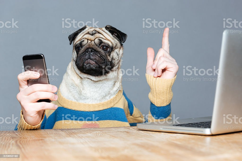 Dog with man hands using mobile phone and pointing up stock photo