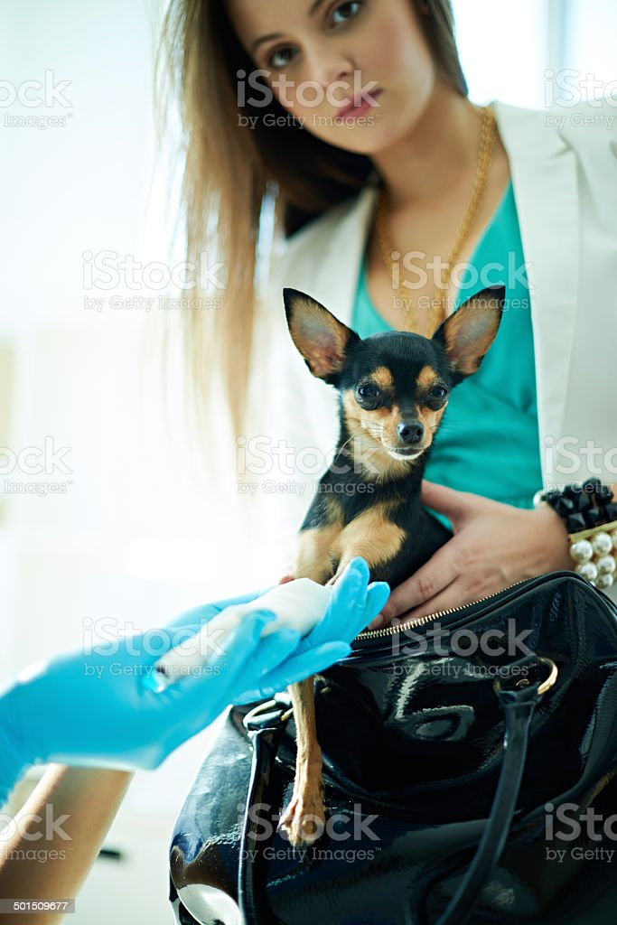 Dog with master royalty-free stock photo