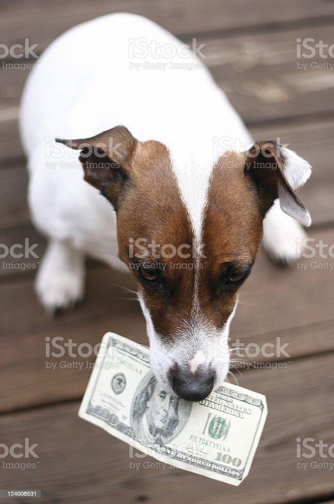 Dog with money royalty-free stock photo
