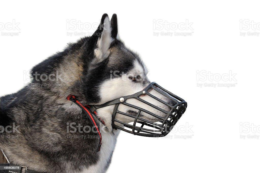 Dog with muzzle stock photo