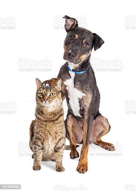 Dog with paw on head of cat picture id524908562?b=1&k=6&m=524908562&s=612x612&h=f jqv2l bxx7wpnsyybmzdtdjlqhpptqav83kqokbs4=