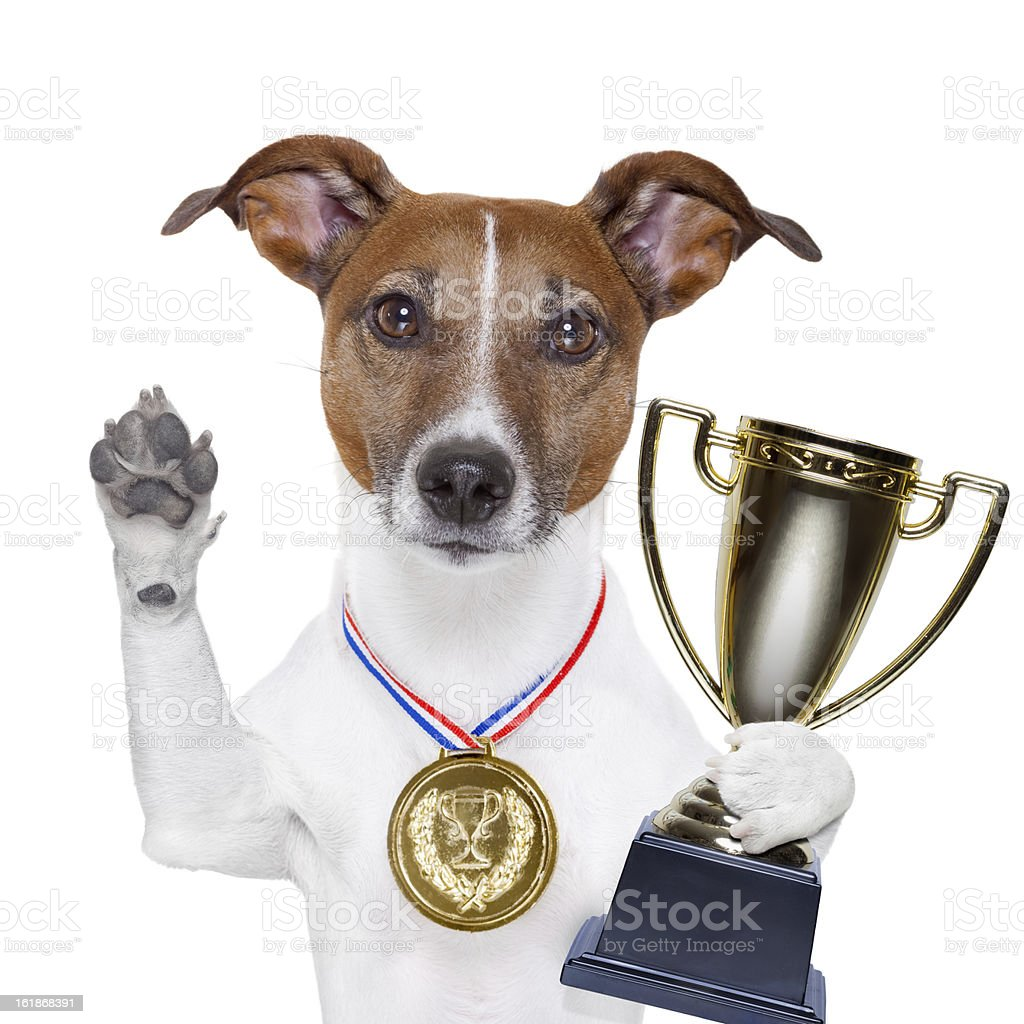 Dog with paw raised, holding a trophy and wearing a medal stock photo