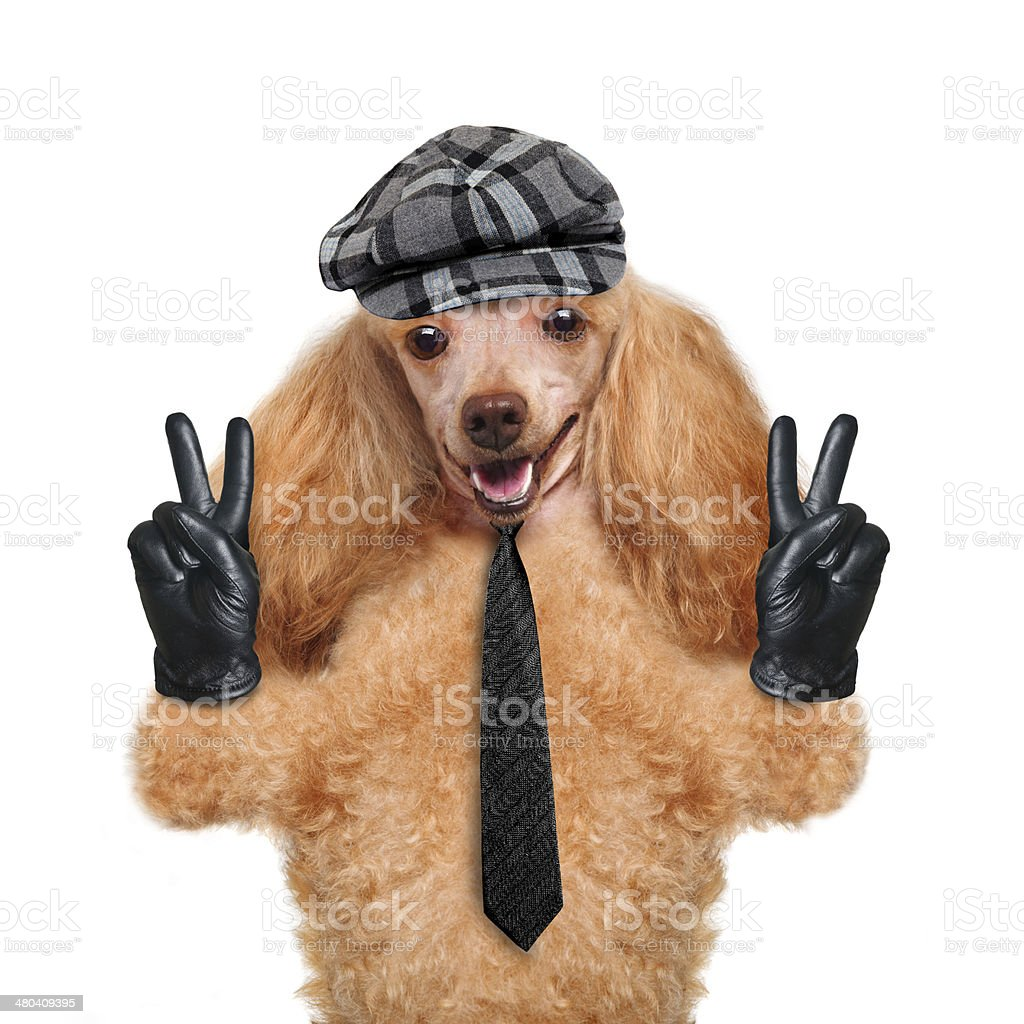 dog with peace fingers in black leather gloves royalty-free stock photo