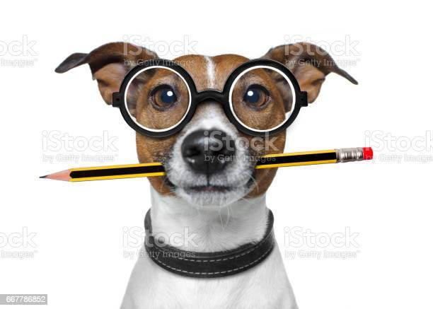 Dog with pencil at the office picture id667786852?b=1&k=6&m=667786852&s=612x612&h=j fexe8heeujgg jbl2ywpt77rzqkd7t3pfqrgayoqc=