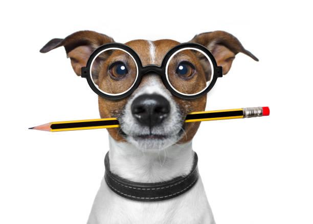 hund mit bleistift im büro - lustiger tierhumor stock-fotos und bilder
