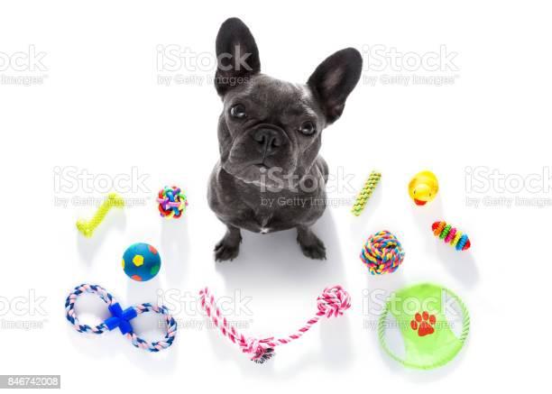 Dog with pet toys picture id846742008?b=1&k=6&m=846742008&s=612x612&h=twe xqlipjqscv r18yp i6kovcv7v3l3jhx5ntpdfk=