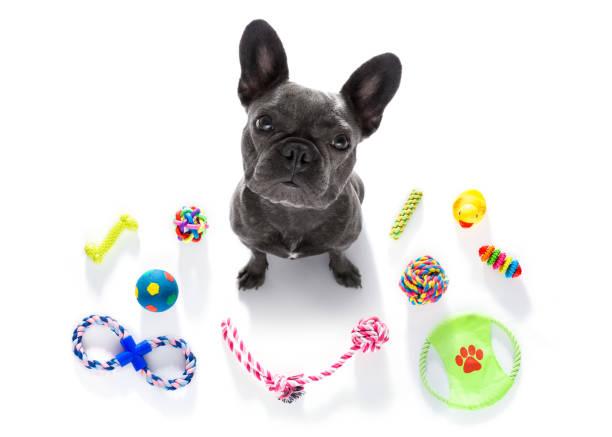 Dog with pet toys picture id846742008?b=1&k=6&m=846742008&s=612x612&w=0&h=rnw jwjamtz507ttxdnrircjp7bhp3apajzjdhvjso0=