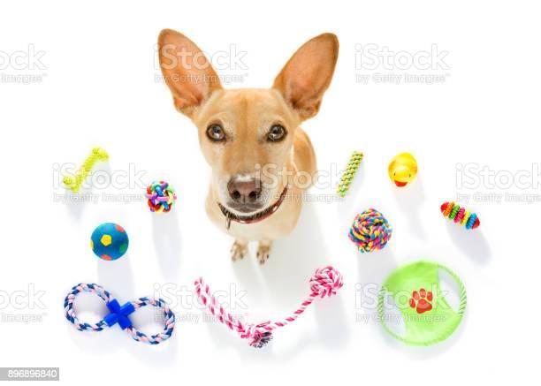 Dog with pet toys picture id896896840?b=1&k=6&m=896896840&s=612x612&h=hkntf yztj8d bdqiaj0ejid2lyls7mifthg8ucbari=