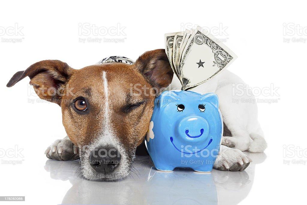 Cane con Salvadanaio a porcellino foto stock royalty-free