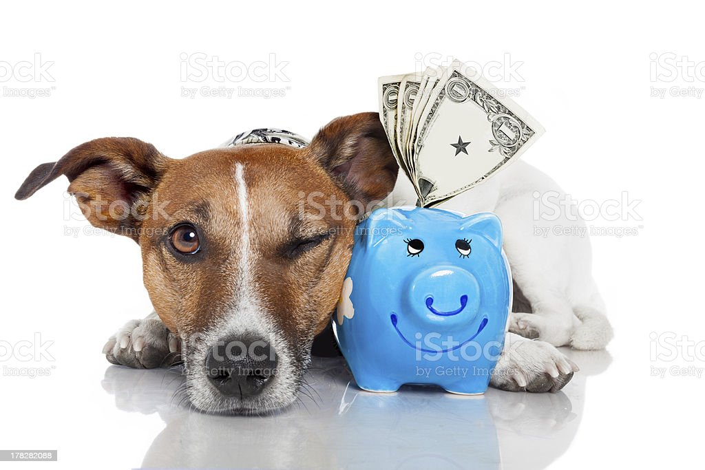 dog with piggy bank stock photo
