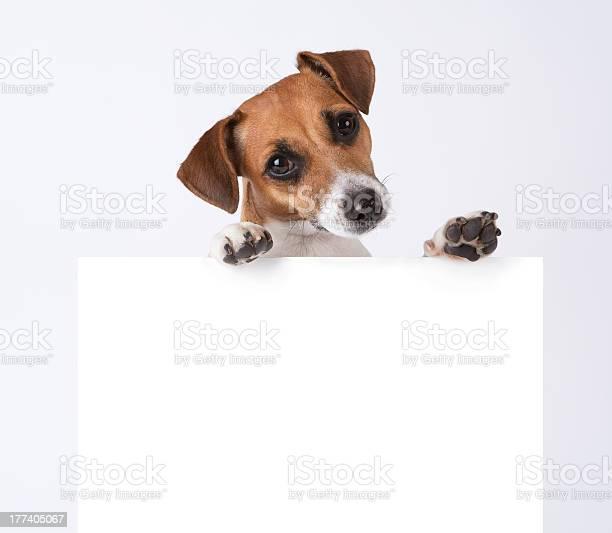 Dog with placard picture id177405067?b=1&k=6&m=177405067&s=612x612&h=eifhaefokqsuoecsslqjsydfwivgzmoaxuc5f7s4z6e=
