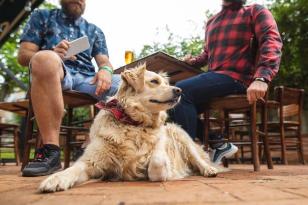 Hund mit rotem Bandana wartet im Café auf seinen Besitzer – Foto