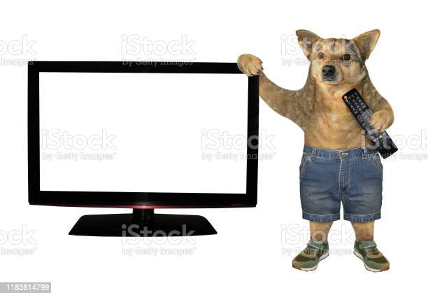 Dog with remote near the tv picture id1183814799?b=1&k=6&m=1183814799&s=612x612&h=y8vab5kndxdxo1ye1rve 1tswfn6 2ar y9j tykgsg=