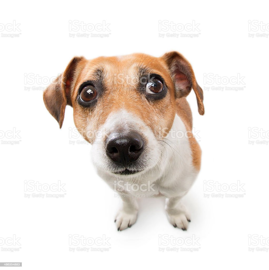 Dog with sad eyes look stock photo
