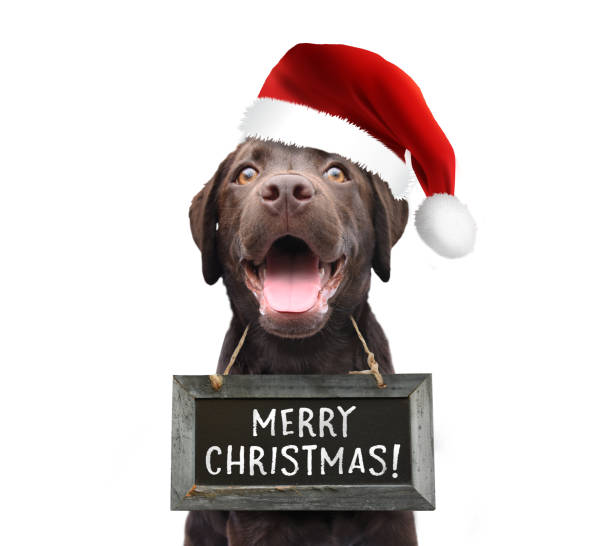Dog with santa claus hat wishing you a merry christmas 2018 wearing a sign board with handwritten quote white isolated background stock photo