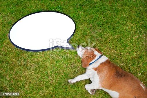 Dog sleeps on garden with Speech Bubble.