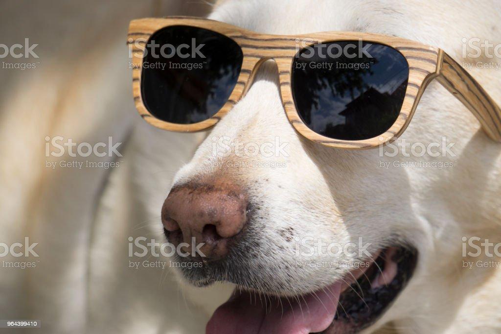 Hond met sunglas - Royalty-free Bulgarije Stockfoto