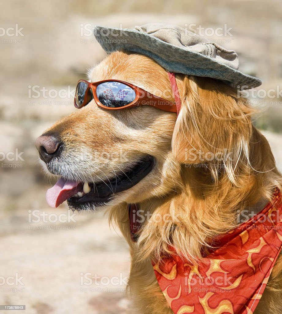 Dog with sunglasses, hat and kerchief royalty-free stock photo
