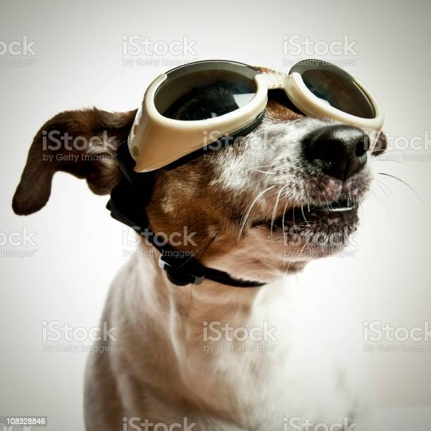 Dog with sunglasses picture id108328846?b=1&k=6&m=108328846&s=612x612&h=2cs6ymo8mbvbepigmkv1fk102bkn20nv95n khym4v8=
