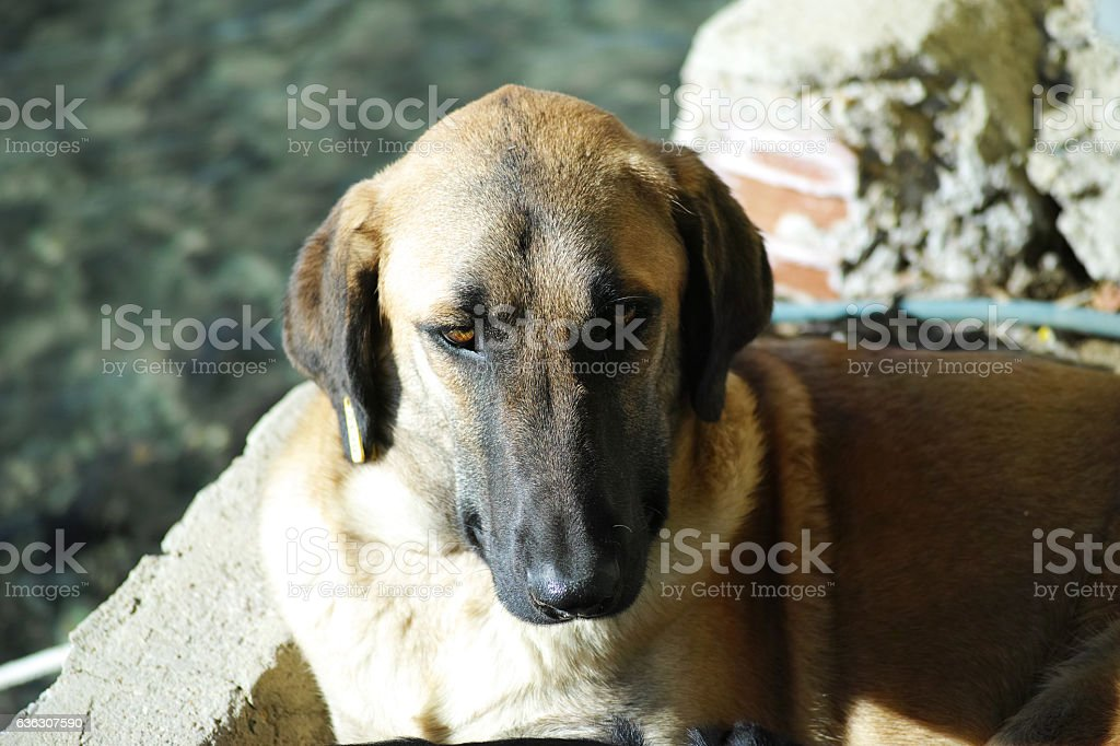 Dog With Sunny Natural Background stock photo