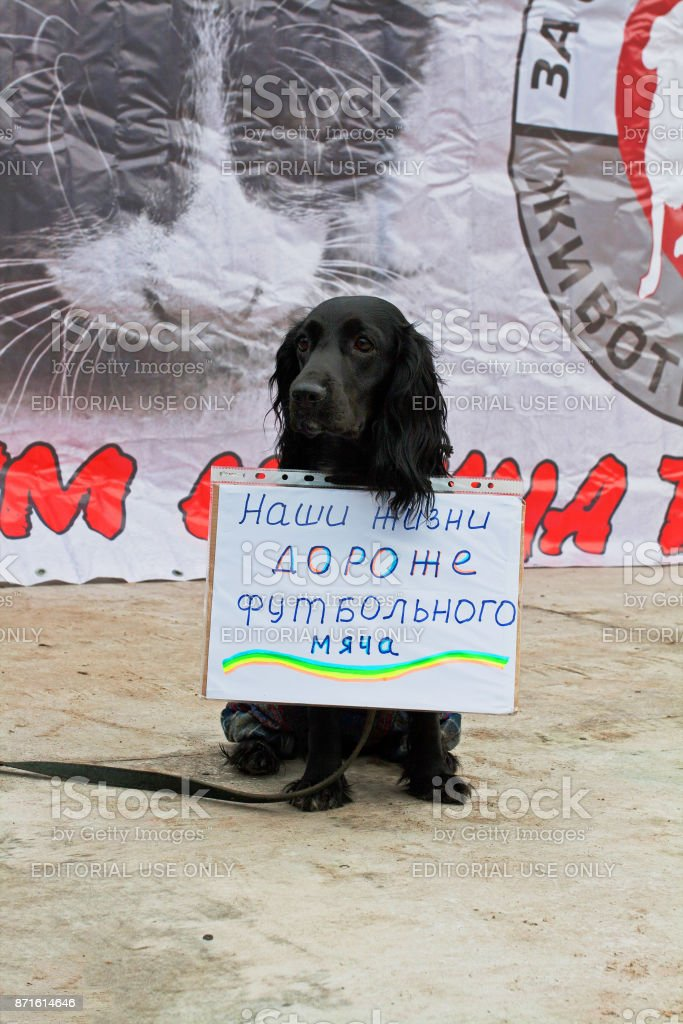 Dog with table (translated from the Russian 'Our lives are more expensive than a soccer ball') in international action for the protection of animals 'Fair Play' in Volgograd stock photo