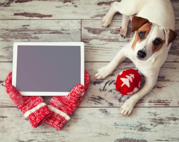 hund mit tablet auf weihnachten hintergrund - frohes neues jahr stock-fotos und bilder
