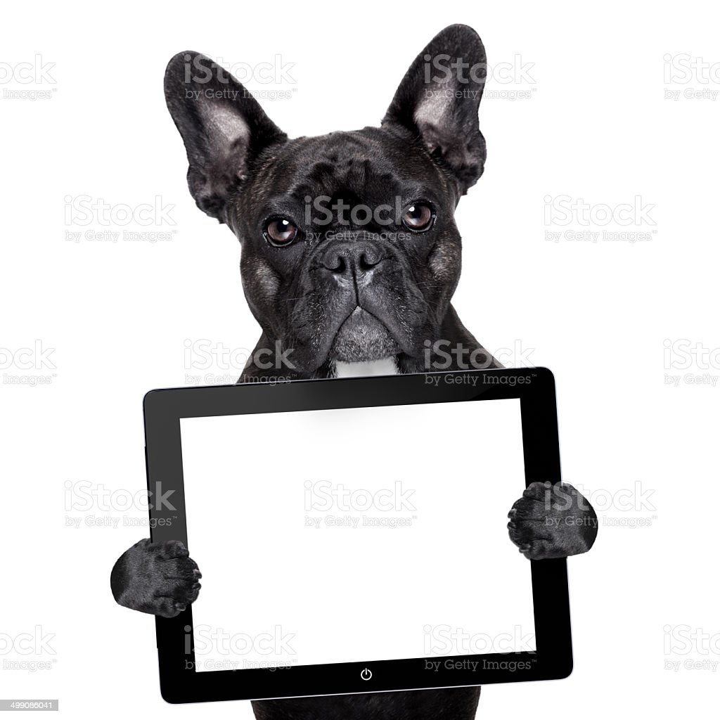 dog with tablet pc stock photo
