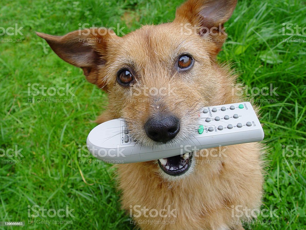 Dog with TV remote royalty-free stock photo