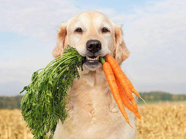 Dog with vegetables stock photo