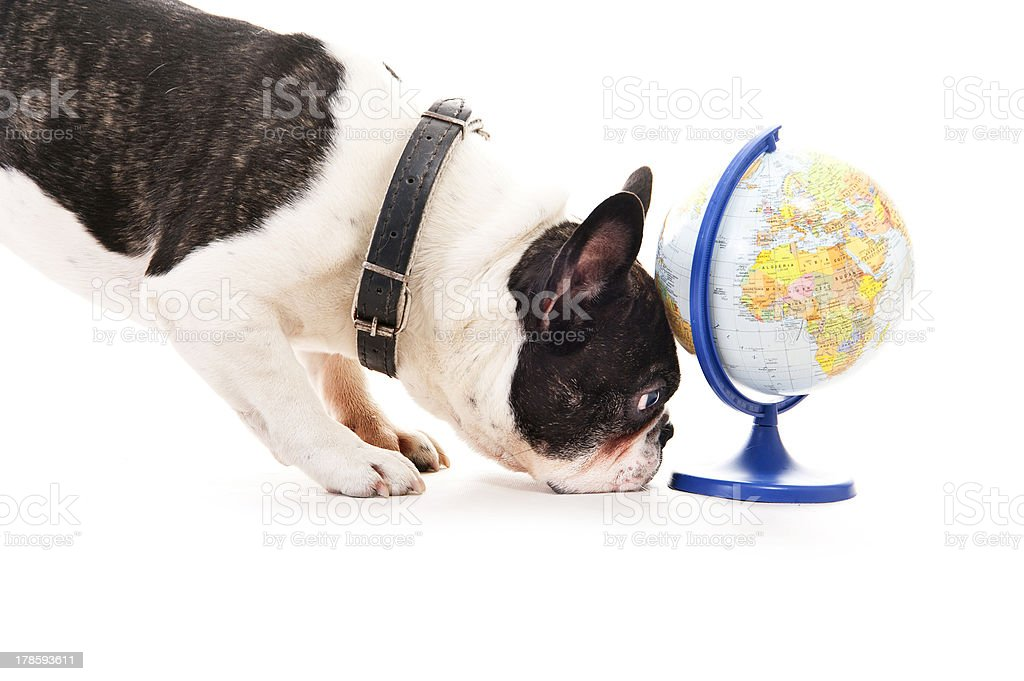 Dog with world map over white background royalty-free stock photo