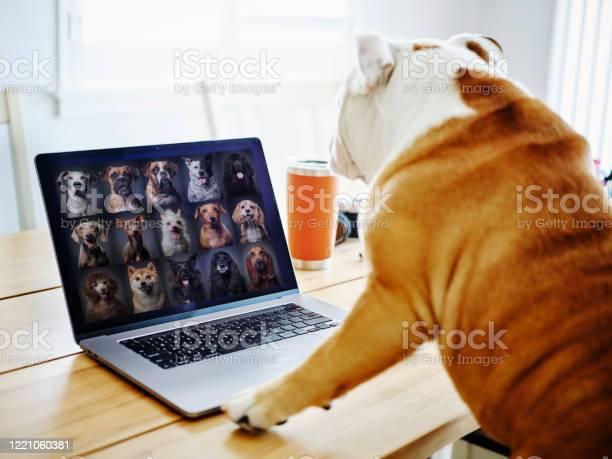 Dog working at home on a web chat meeting picture id1221060381?b=1&k=6&m=1221060381&s=612x612&h=ckwi c7mi89ltsquwlosnxadktxvtztggogrkdkfg2o=