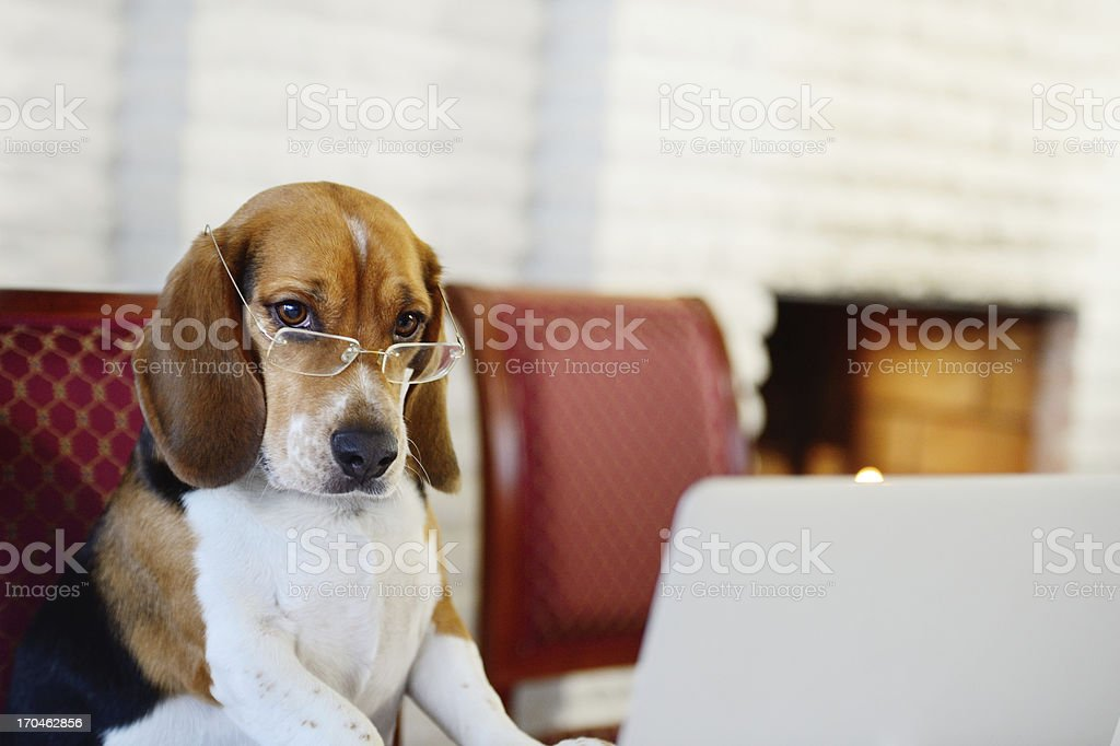 Dog working comfortably from home stock photo