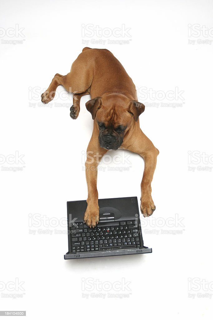 Dog working on laptop royalty-free stock photo