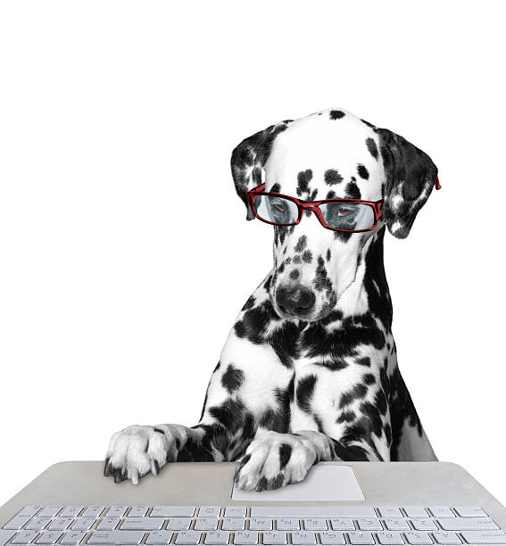 Dog working on the computer picture id516690400?b=1&k=6&m=516690400&s=612x612&w=0&h= r sbcssxmtw1wrwkgbg9gjdepu8eobo6fg96bw46bs=