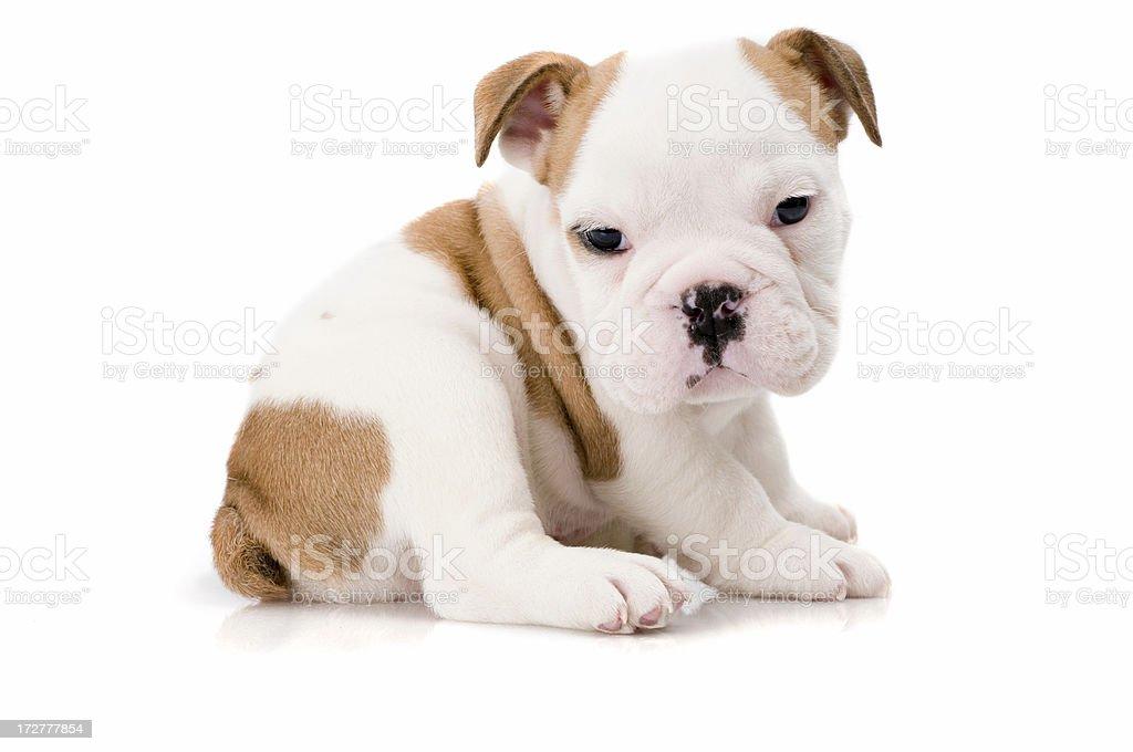 dog world royalty-free stock photo