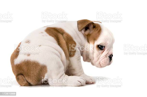 Dog world picture id172870998?b=1&k=6&m=172870998&s=612x612&h=4nc8bea mnxata4 useu6ustk66mygm0v5uccyhqrde=